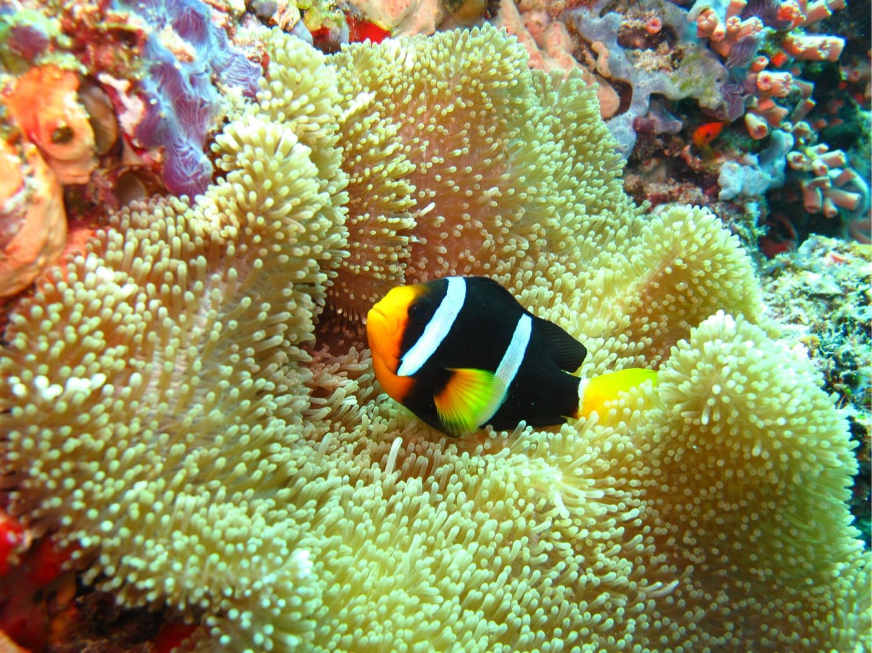Coral Reef at Ellaidahoo